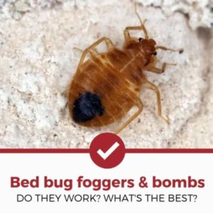 best bed bug foggers and bombs review