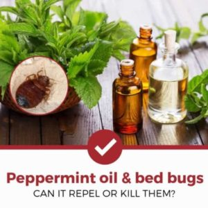 does peppermint oil kill or repel bed bugs