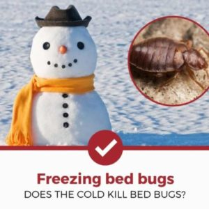 does the cold kill bed bugs
