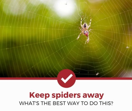 How to Keep Spiders Away