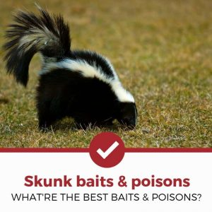 best skunk baits and poisons reviewed