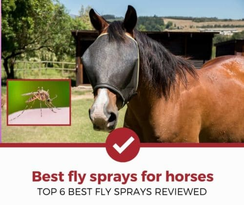 top 6 best fly sprays for horses