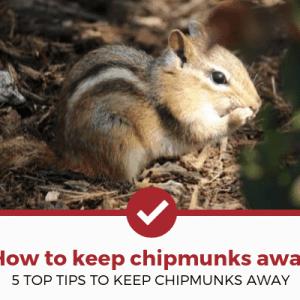 How to Keep Chipmunks Away