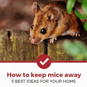 how to keep mice away