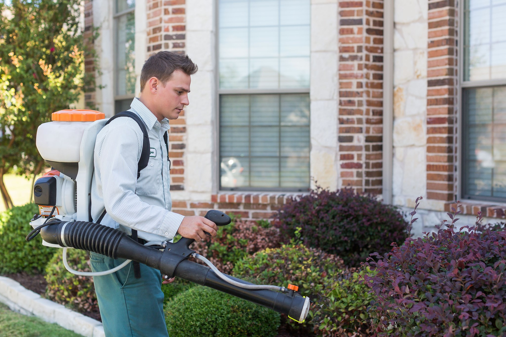 All-Safe Pest and Termite services