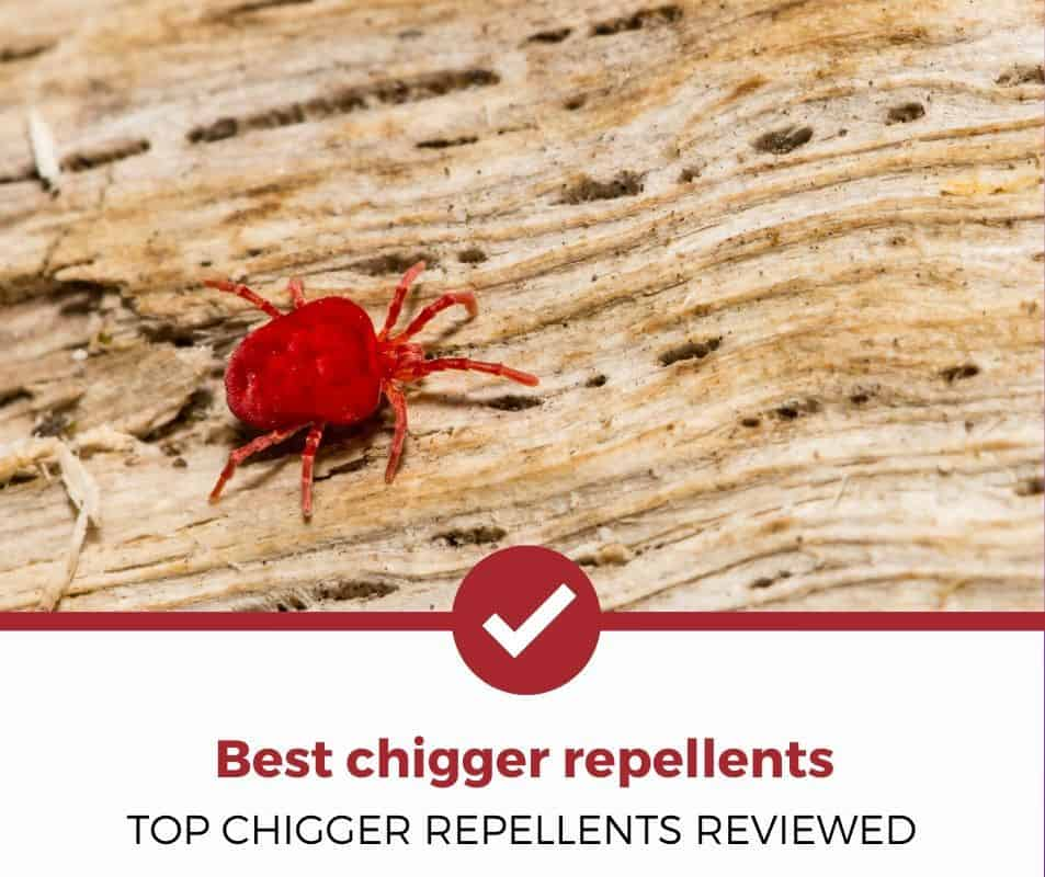 Top Chigger Repellents Reviewed