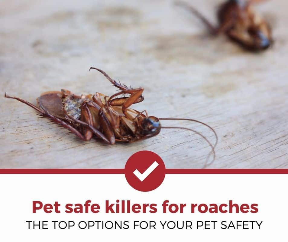 Best Pet Safe Killer for Roaches