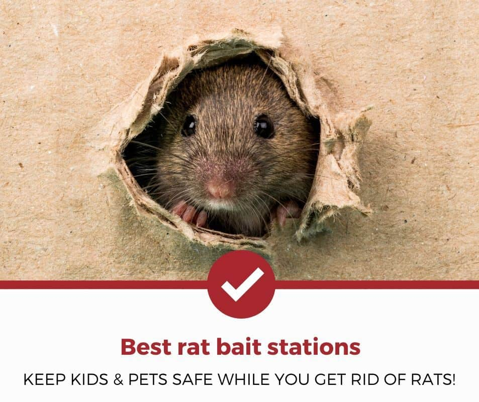 Best Rat Bait Stations