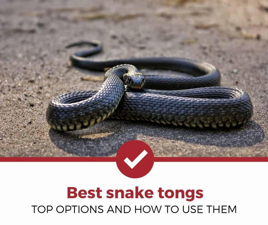 Best Snake Tongs