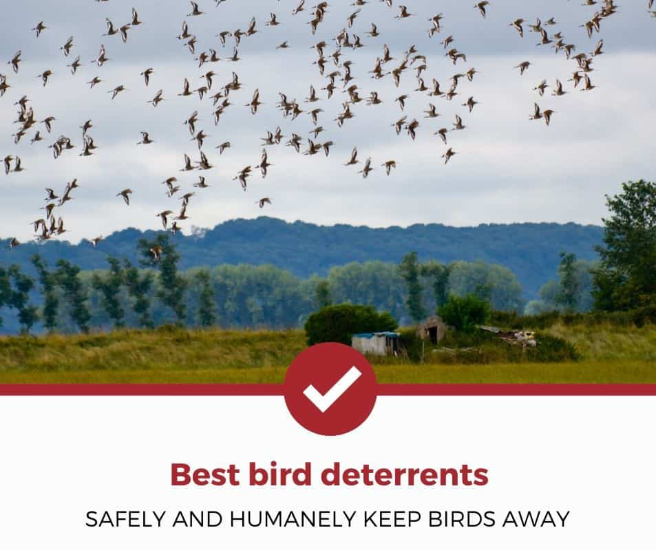 Best bird deterrents