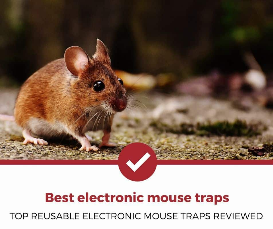 Best electronic mouse trap
