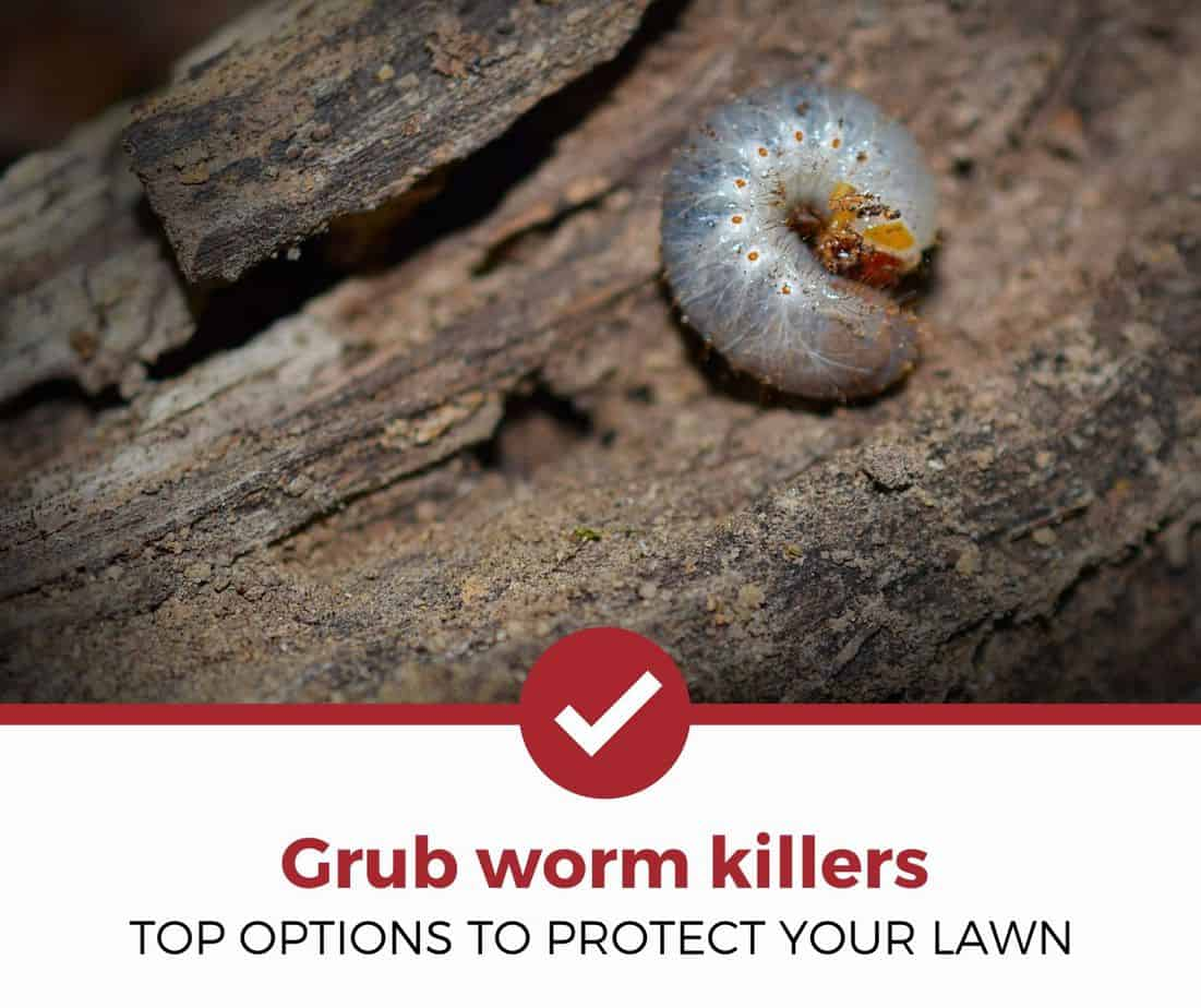 Best grub worm killers