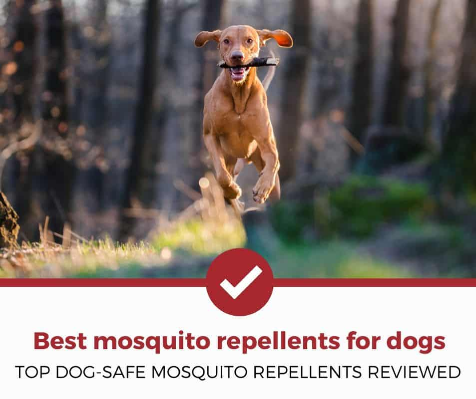 Top dog-safe mosquito repellents reviewed!
