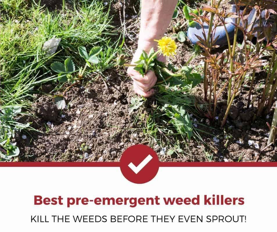Best Pre-Emergent Weed Killers