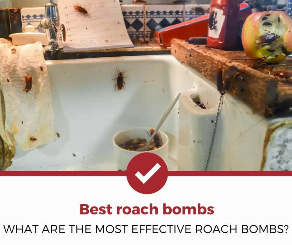 What are the most effective roach bombs?