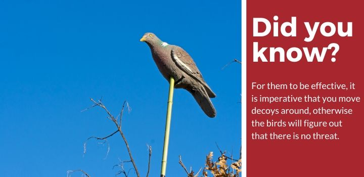 Bird deterrent facts