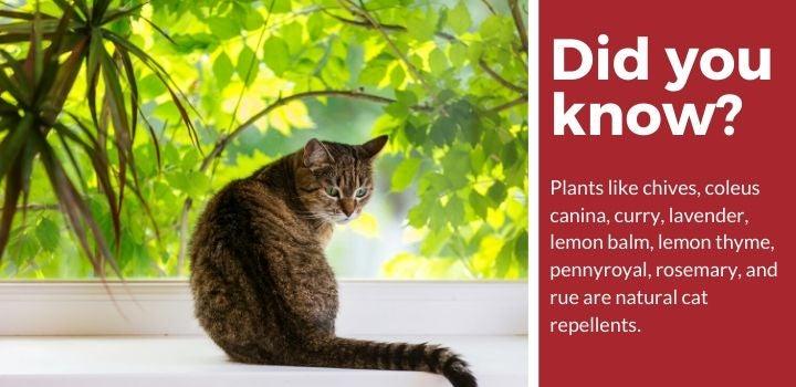 Cat Repellent Reviews
