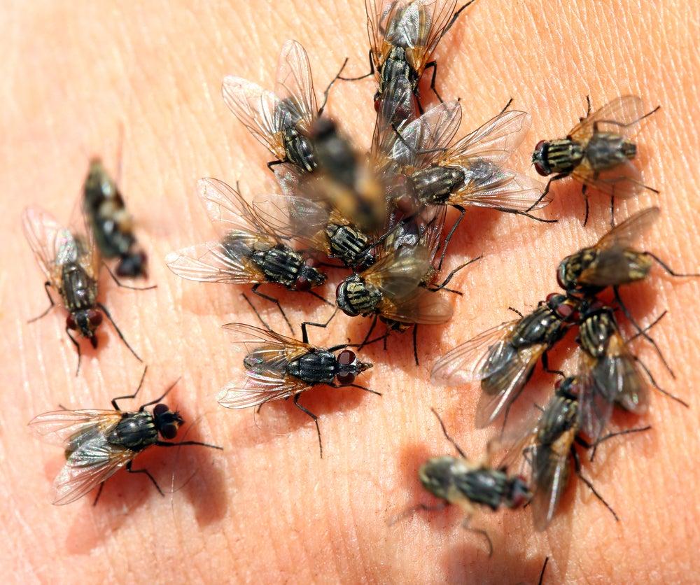 lots of flies on skin - macro shot