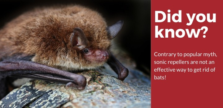 Did You Know Bats