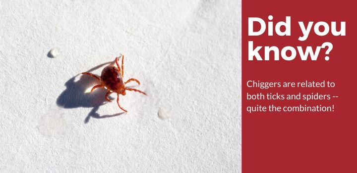 Chigger Facts