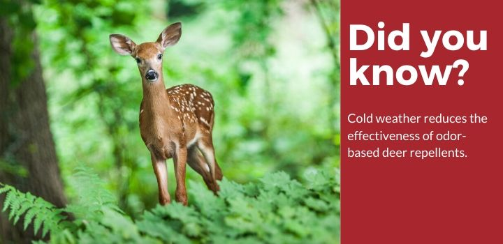 Deer Facts