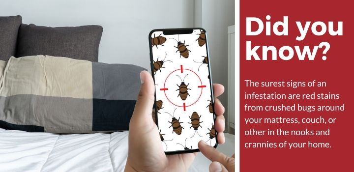 Signs of Bed Bugs in Your Home