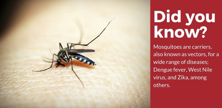 Did you know mosquitoes are carriers?