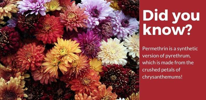 Permethrin Spray Facts