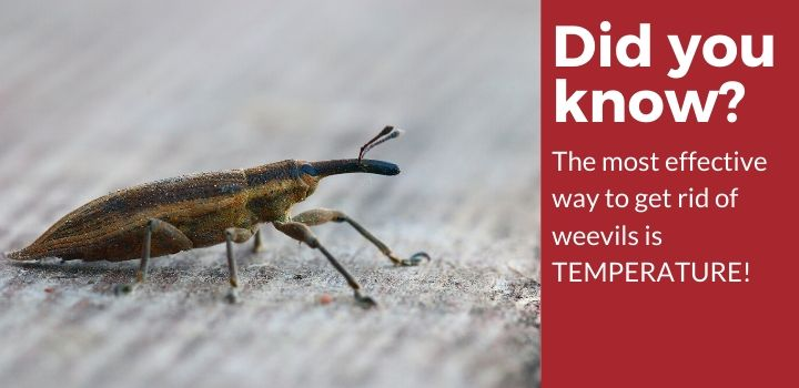 Weevil Facts