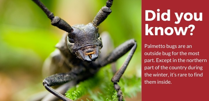 Did You Know Palmetto Bug