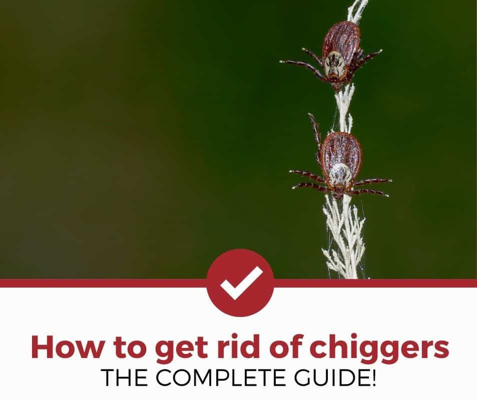 The Complete Guide to Getting rid of Chiggers