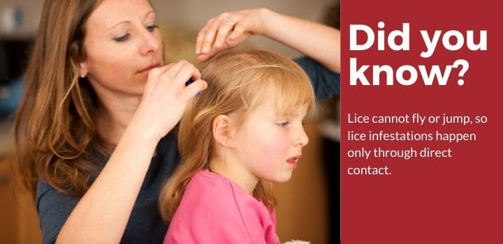 Lice cannot fly or jump!