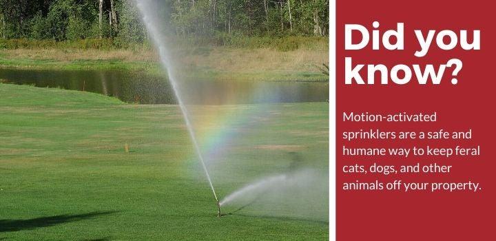 Installing Motion-Activated Sprinkler