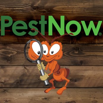 Pest Now of Virginia Review