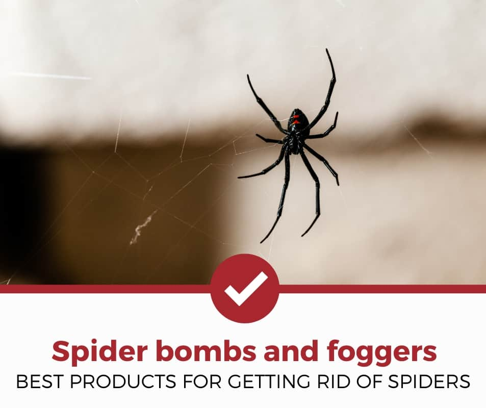 Spider Bomb and Fogger