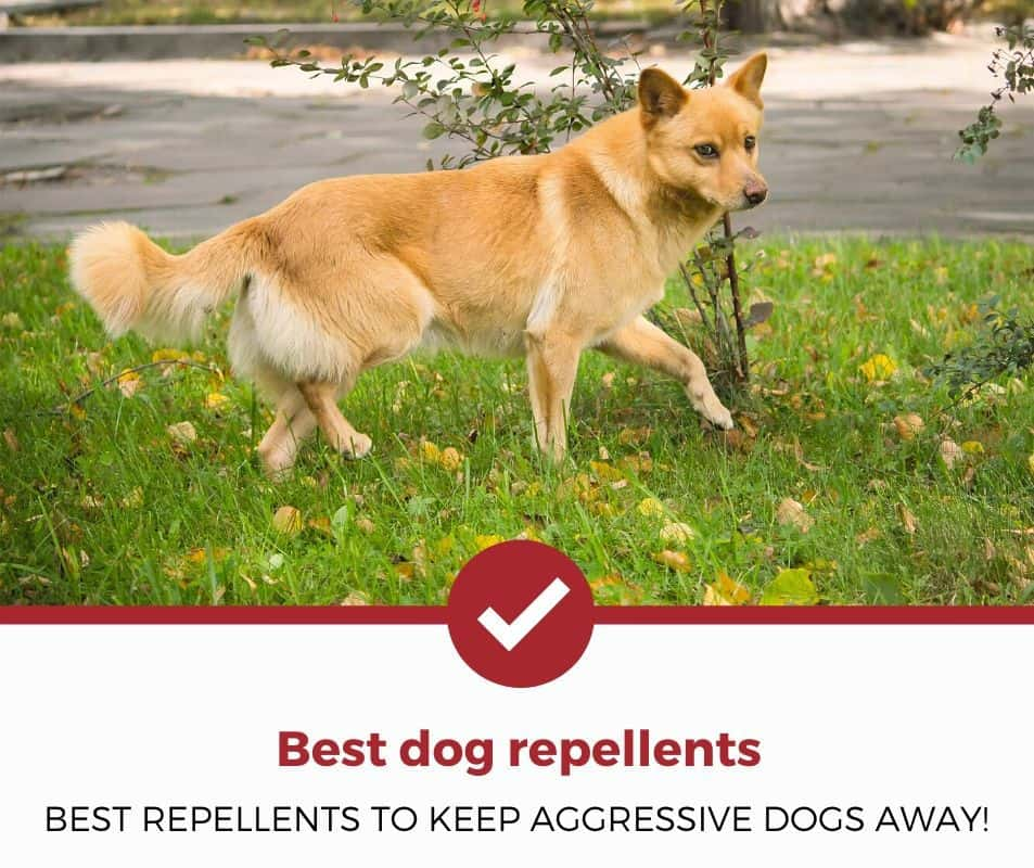 Best Dog Repellents