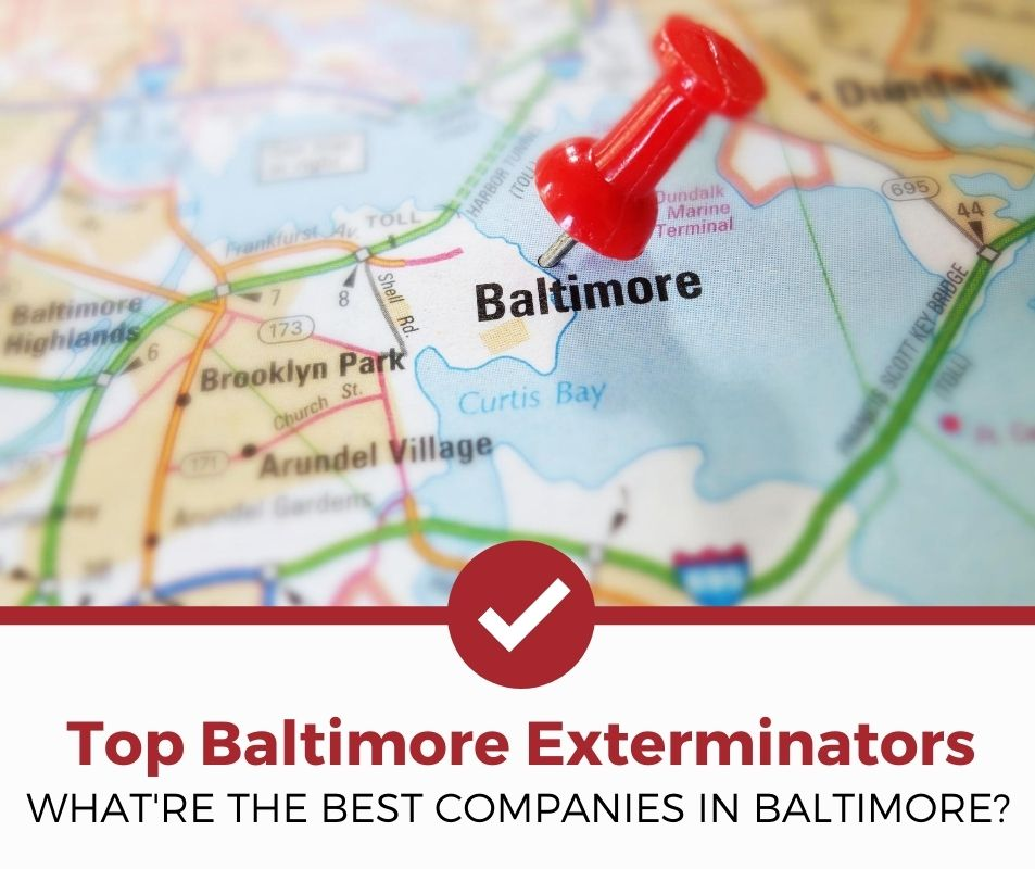 best baltimore md pest control companies