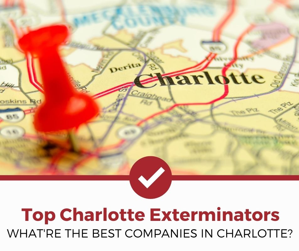 best charlotte nc pest control companies