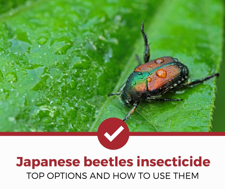 best-insecticide-for-japanese-beetles review