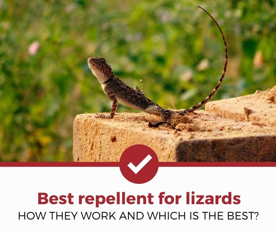 best lizard repellent review