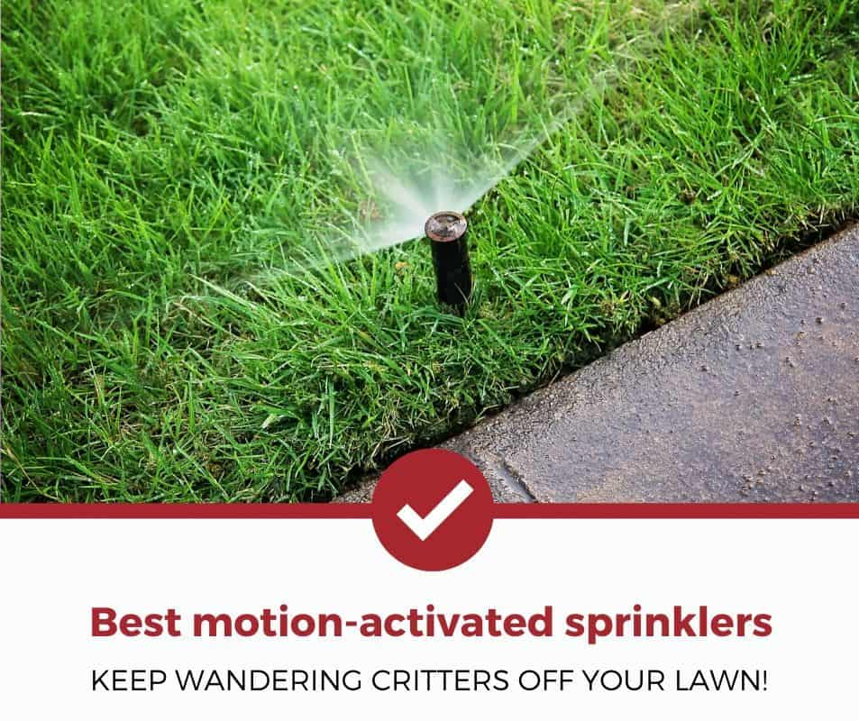 Best motion-activated sprinklers