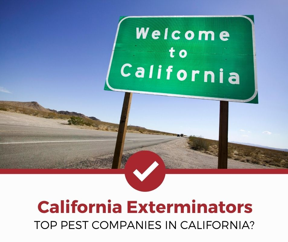 best pest-control company california