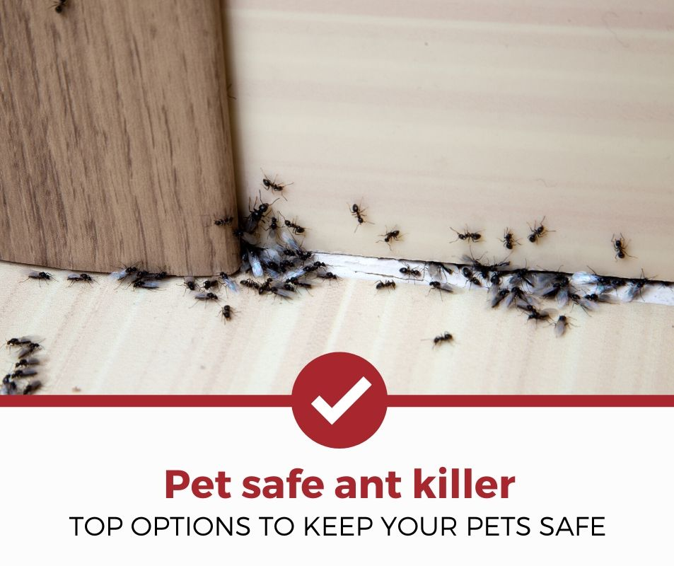 best pet safe ant killer review