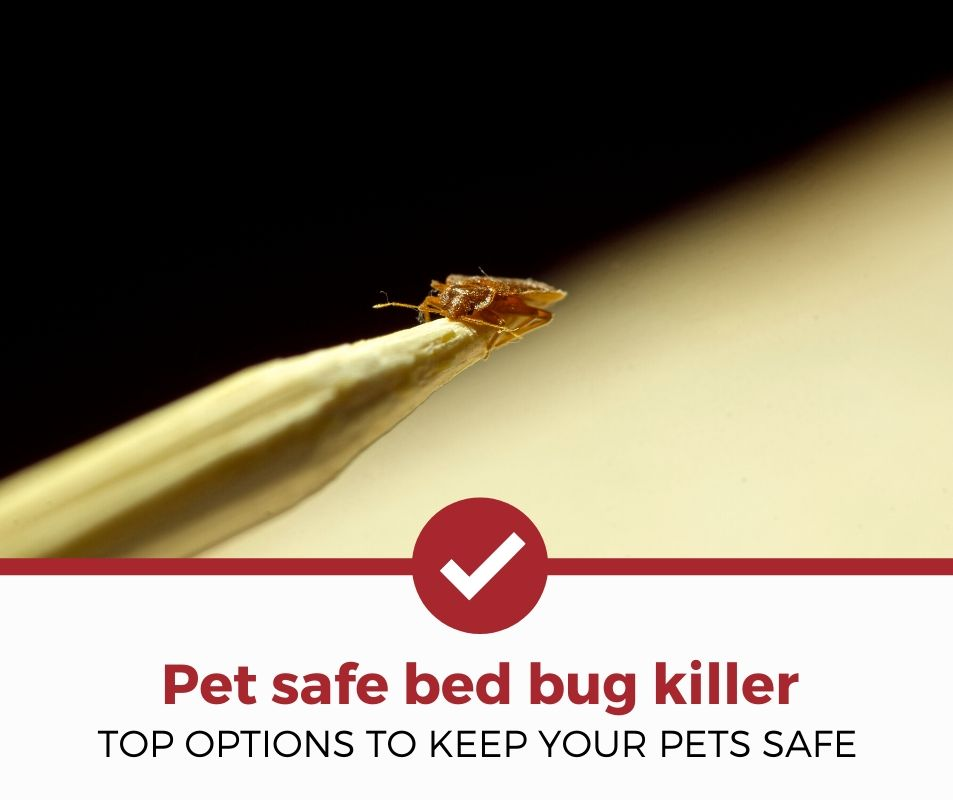 best pet safe bed bug killer review
