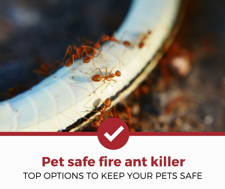 best pet safe fire ant killer review