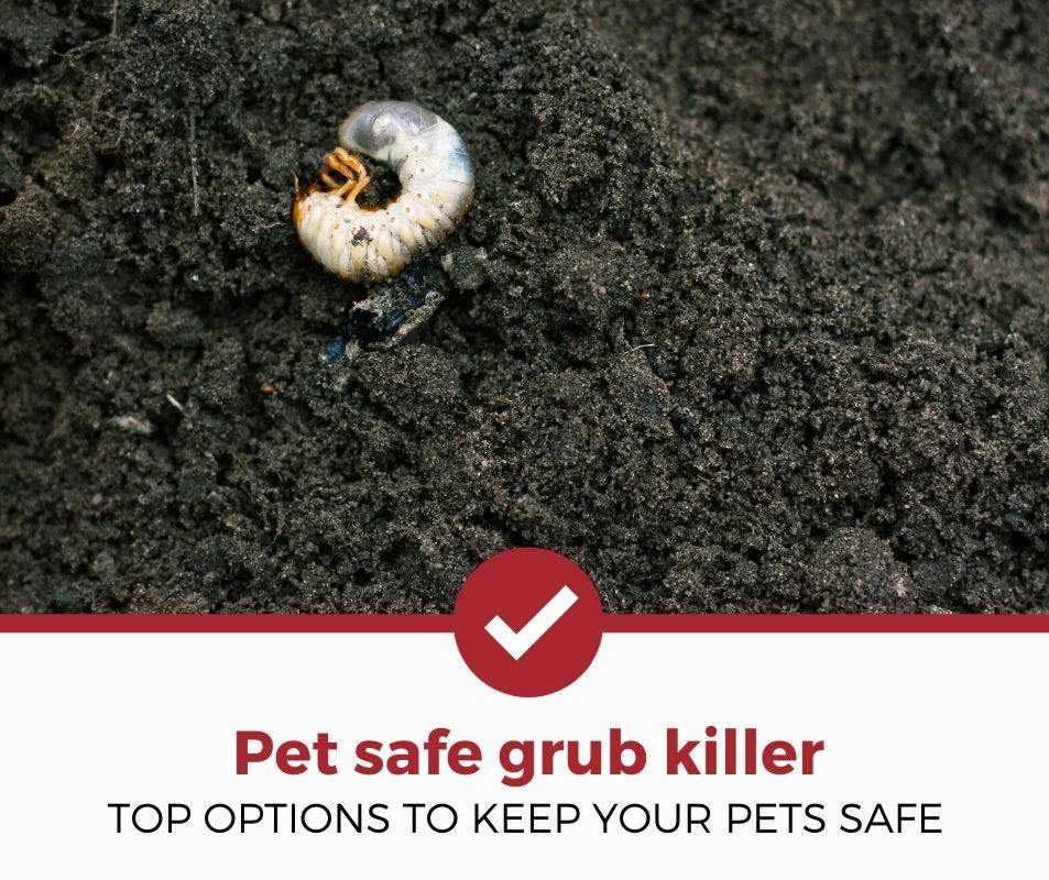 best pet safe grub killer review