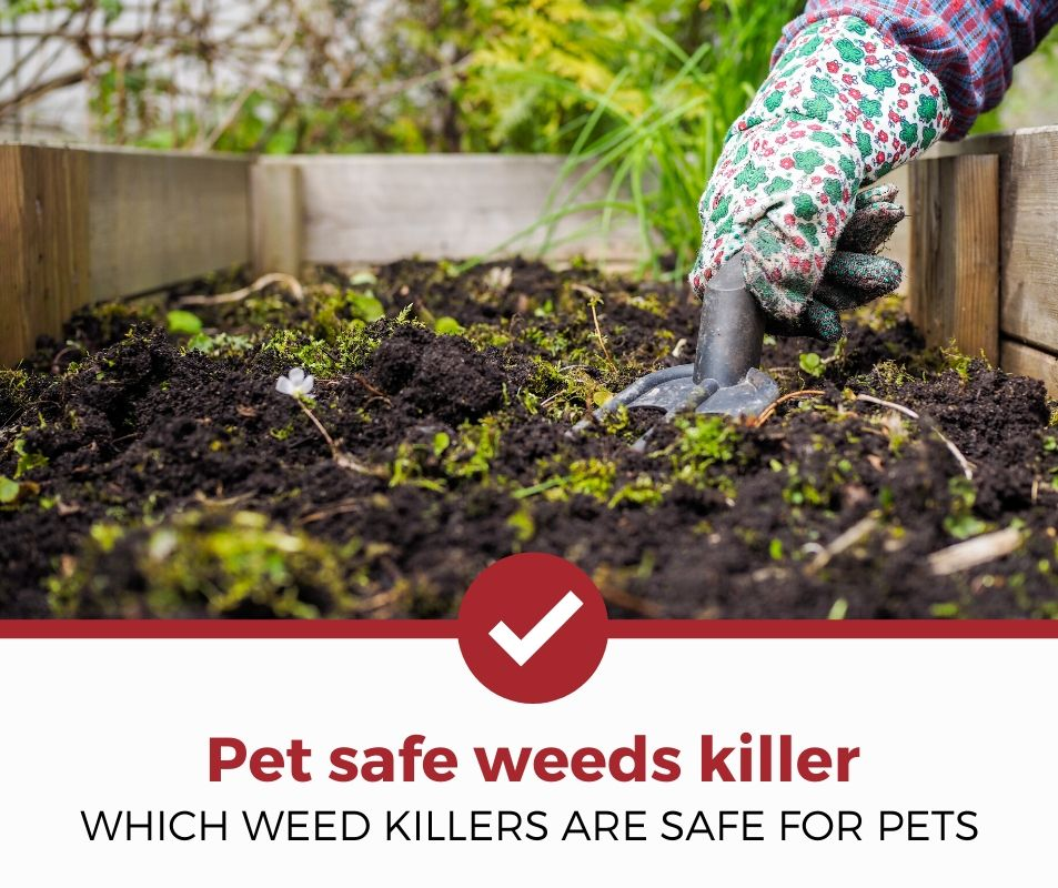 best pet safe weeds killer review