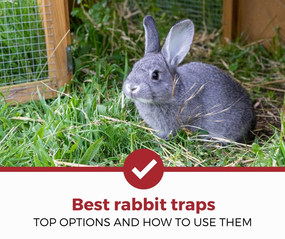 best rabbit traps review
