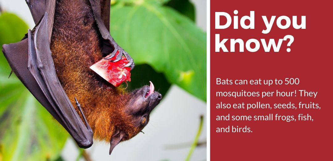 did you know best bat repellent fact