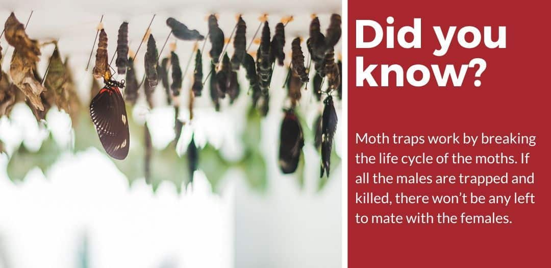 did you know best moth traps